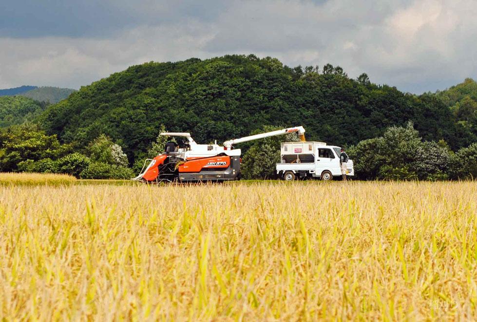 籾を小型トラックに移す