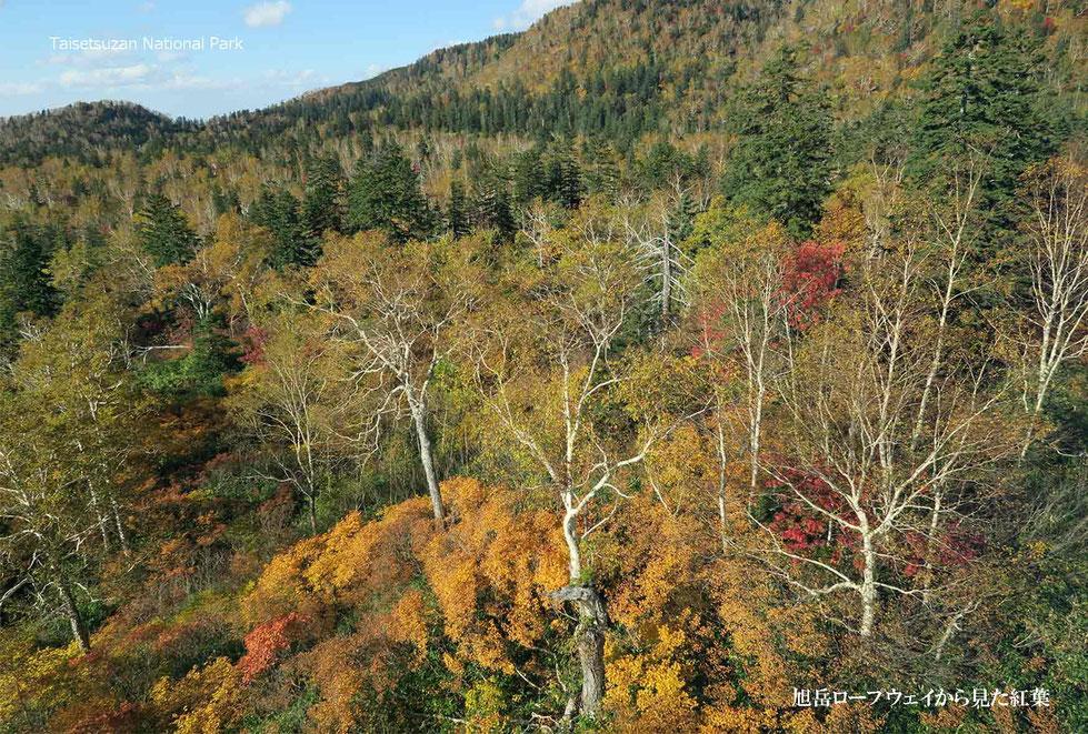 旭岳ロープウエイから見た紅葉