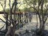 Holzbrücke Halbinsel Kokoboudndji, Guinea
