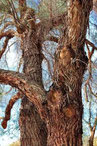 tronco y corteza