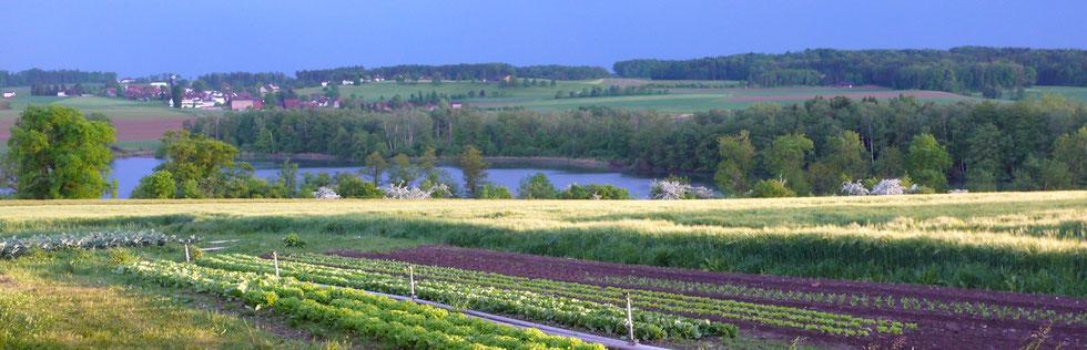 Seeben oberhalb des Hüttwilersees. Hier arbeiten wir und pflanzen nebst Knoblauch auch weitere Gemüse zum Direktverkauf an.
