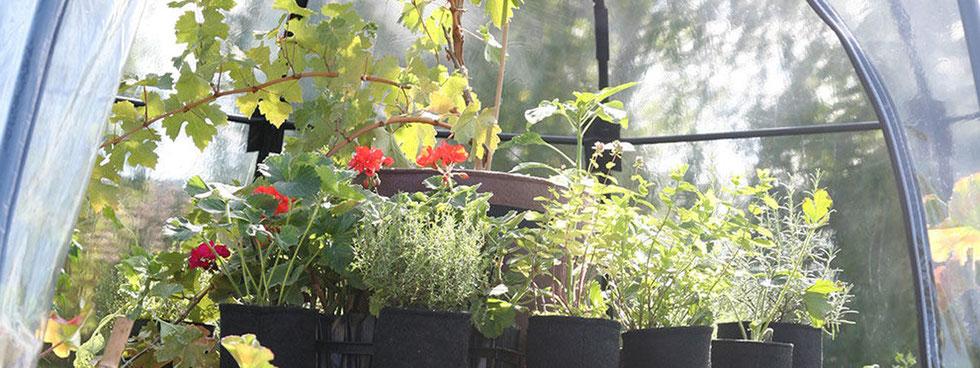 Kleine Gewächshäuser und Garten-Cloches gibt es bei www.the-golden-rabbit.