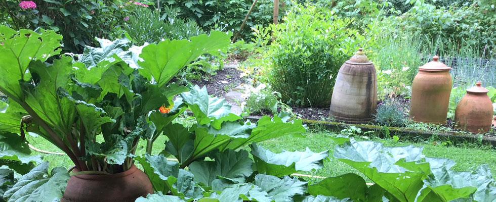 Rhabarber Bleichtöpfe gibt es bei www.the-golden-rabbit.de