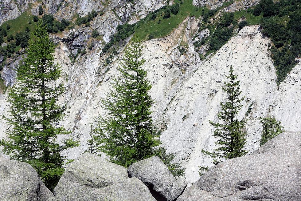 La Mer de Glace. Petit âge glaciaire. Blocs de granit et cordons morainiques qui montrent les reculs entrecoupés de ré-avancées d'une ou plusieurs décennies. Montenvert. Chamonix Mont-Blanc. Haute-Savoie.