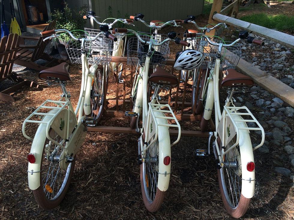 Flotte de vélo d'un camping !