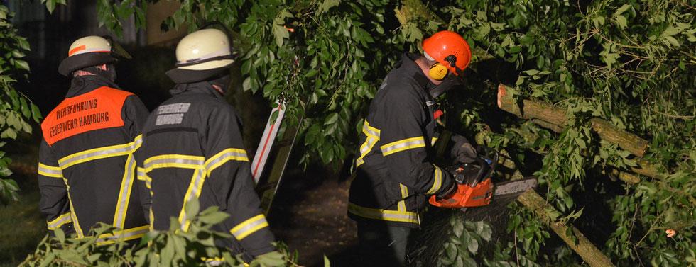05.07.2015 - Baum durch Blitzschlag gespalten.