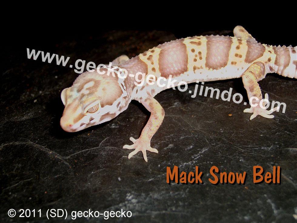Mack Snow Bell