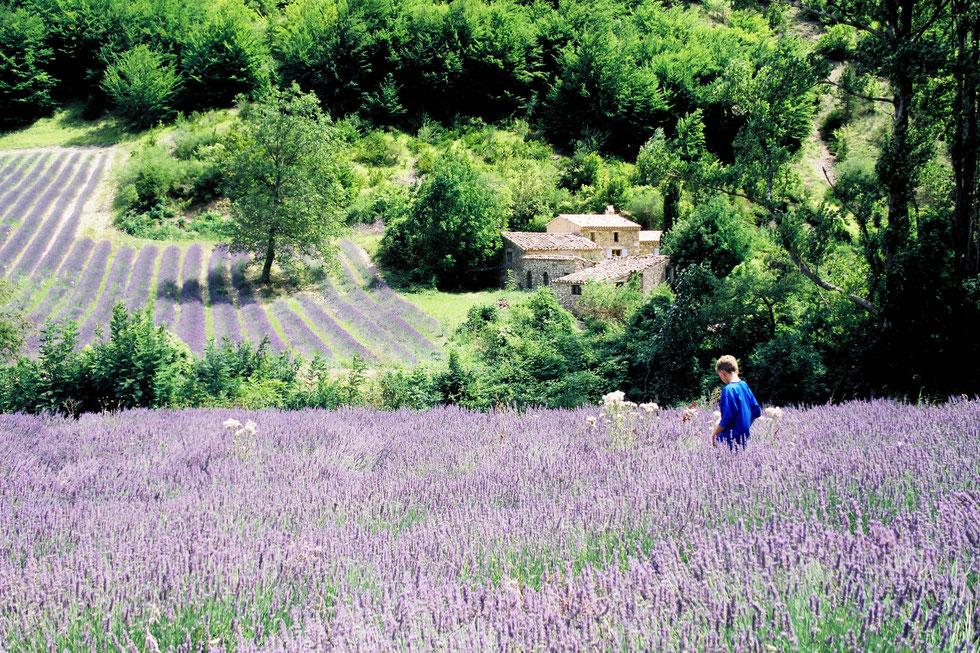 Lavender, Tijs 2001