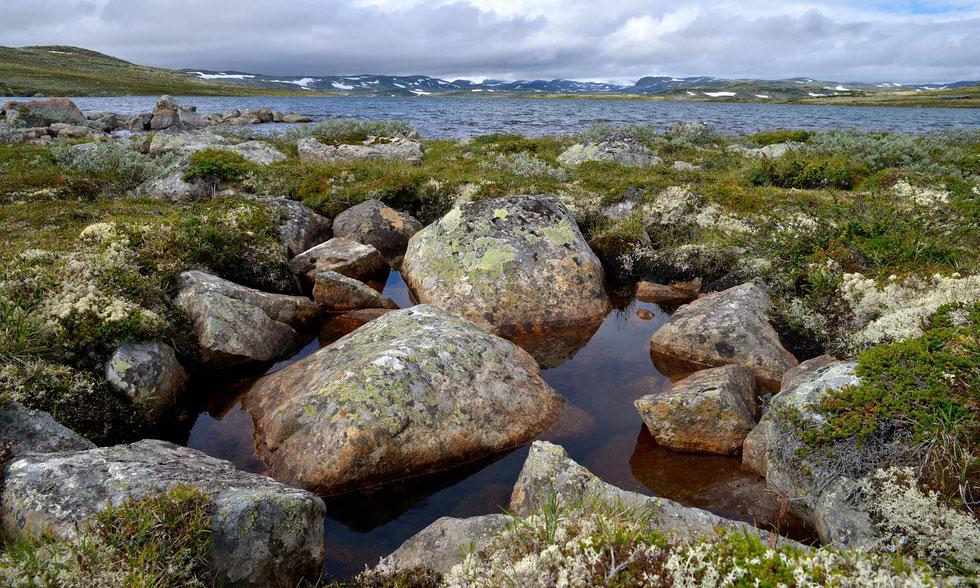 Hardangervidda N.P. Norwegen 2017
