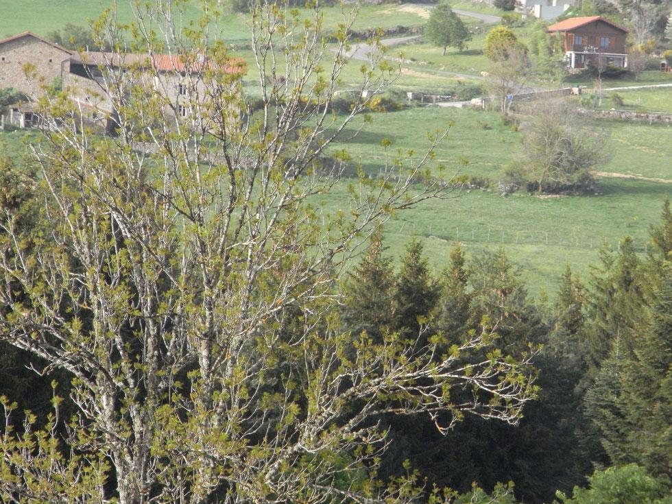 Hameau du Peyrot