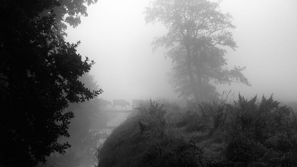 """d-pixx Fotograf 2015 Runde 6 – Die Wettbewerbsgalerie ist online! Dieses Foto mit dem Titel """"Kuhbrücke"""" war meine erste Teilnahme an einem Wettbewerb!"""