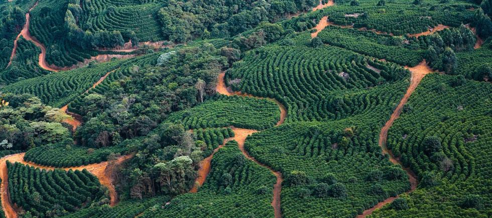 Parzellenkaffee (Fazendas Dutra Brasilien)