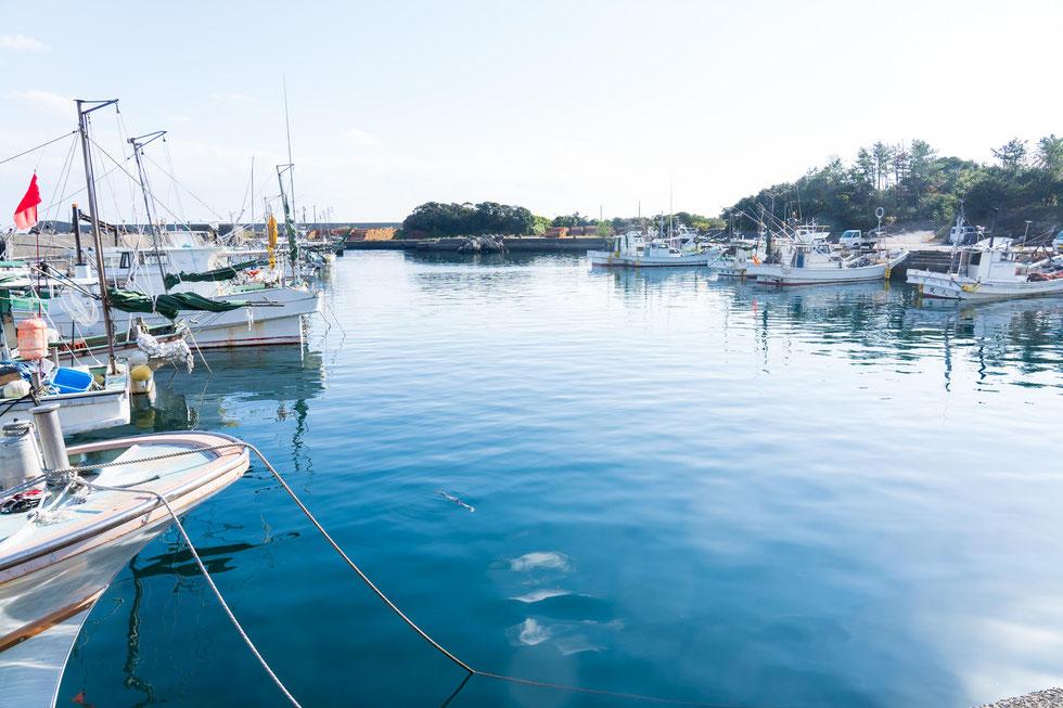 晴天の安房漁港にて,屋久島ブルーツーリズム推進協議会,うお泊やくしま,農泊事業
