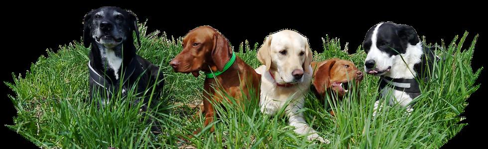 Hundebetreuung für Berlin und Brandenburg durch Viktoria Degner, © Tiernanny24