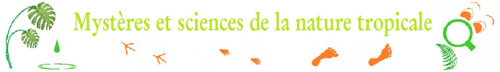mystere nature decouverte loupe science participative education environnement tropical guadeloupe patrimoine culture activite plein air traces eau fougere empreinte ecotourisme balade atelier manuel voyage