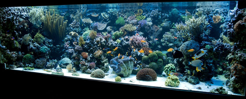 create your own reef
