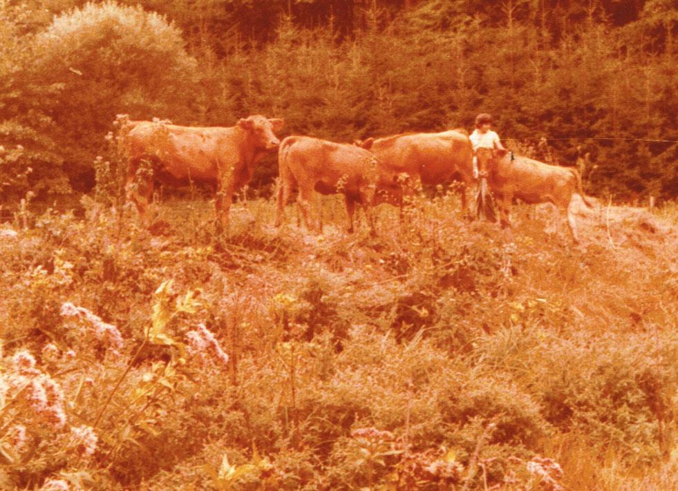 Aus der Anfangszeit: Sommerweide und Landschaftspflege im Buchental um 1975