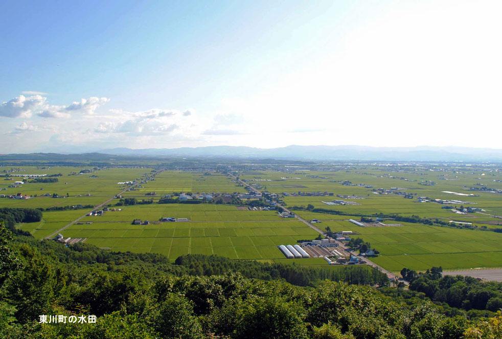 東川町の水田