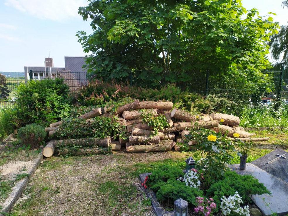 Gefälltes Fichtenholz an der östlichen Friedhofsgrenze