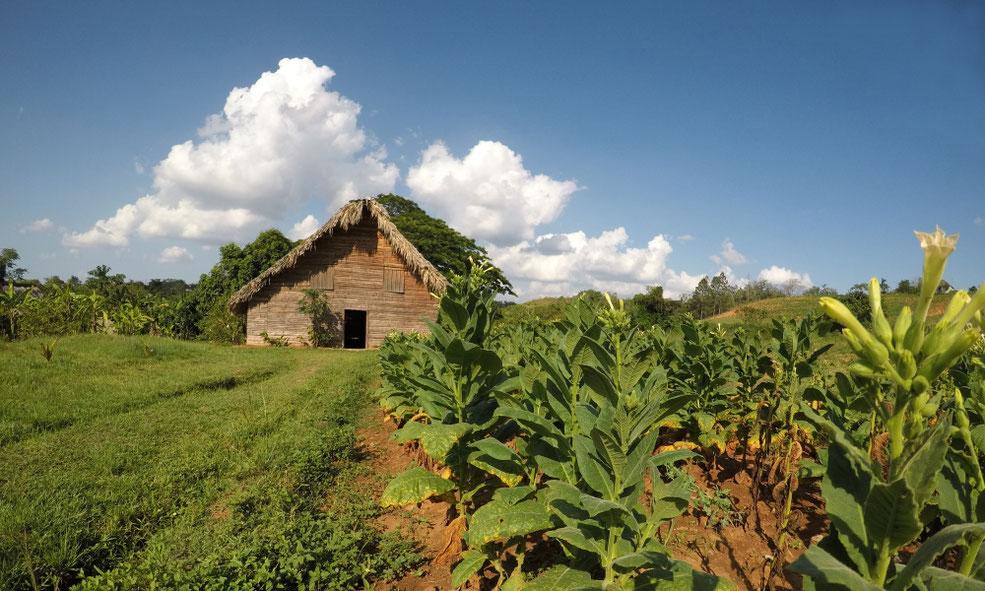 Tabako namelis Vinjaleso slėnyje