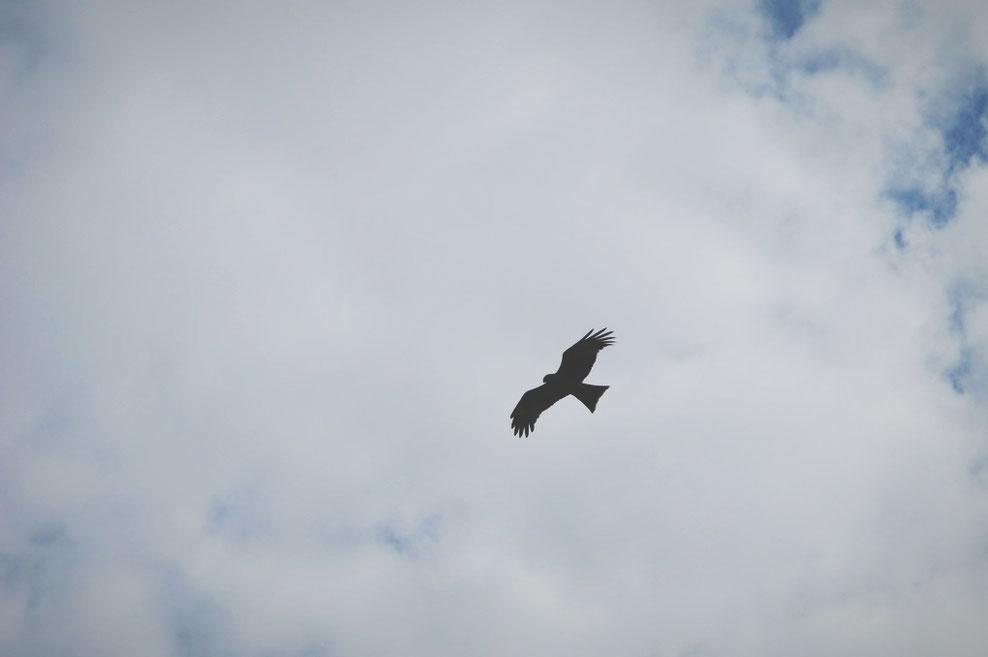 bigousteppes russie sibérie aigle