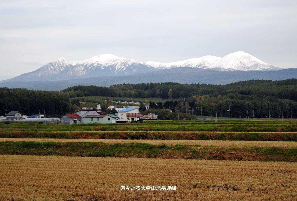 皚々たる大雪山旭岳連峰