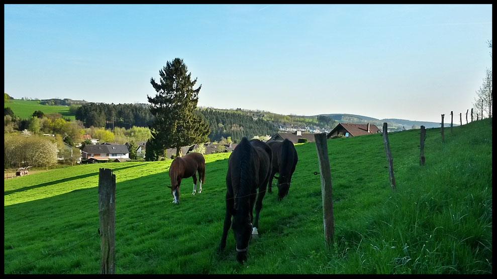 Unterwegs auf dem Steinhauerpfad oberhalb von  Lindlar