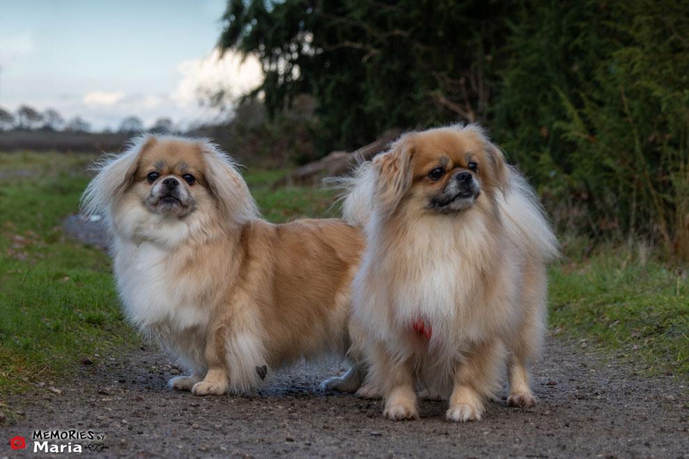Gepensioneerd Lexie & Izzy