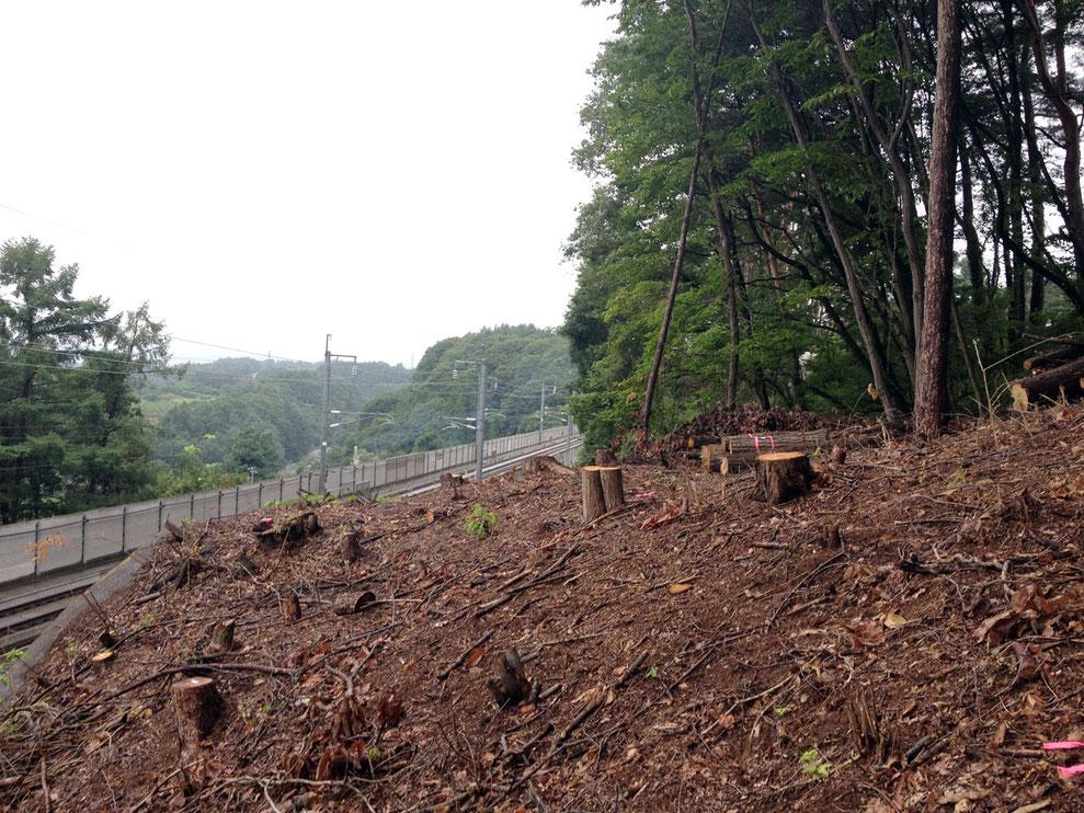 特殊伐採事例(JR北陸新幹線|長野県御代田町)ウッドタワー工法にて施工