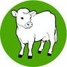 Infektionen mit Eschericia coli bei Rindern