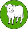 Rinder und  Kaelber
