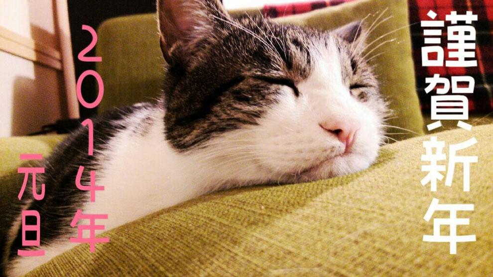 2014年も宜しくお願い致します。Hiroshiの愛猫はる君です。