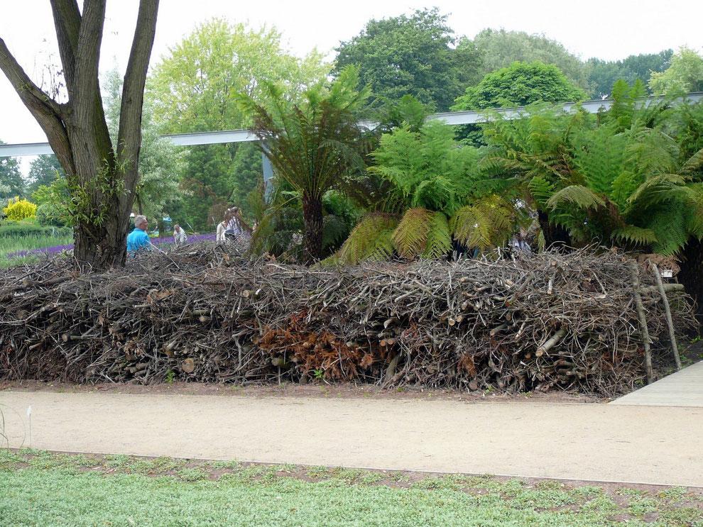 Hier kann man sich schon vorstellen, wo der Kiwi sein Nest gebaut hat...