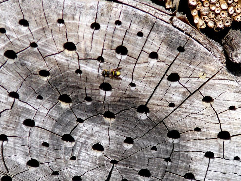 Holzscheibe mit Löchern für Insekten