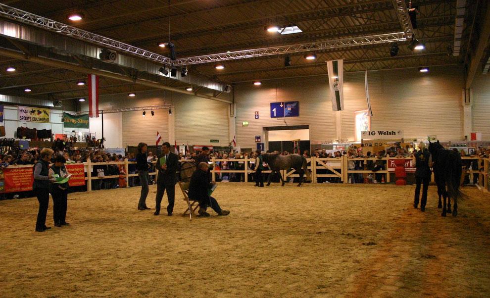 Die Richter bei der Arbeit im Ring vor den Augen des interessierten Publikums in der überfüllten Halle 2