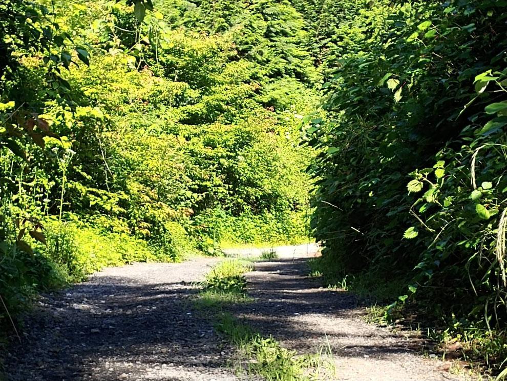 誕生日の道のはじっこ。林道との境目。