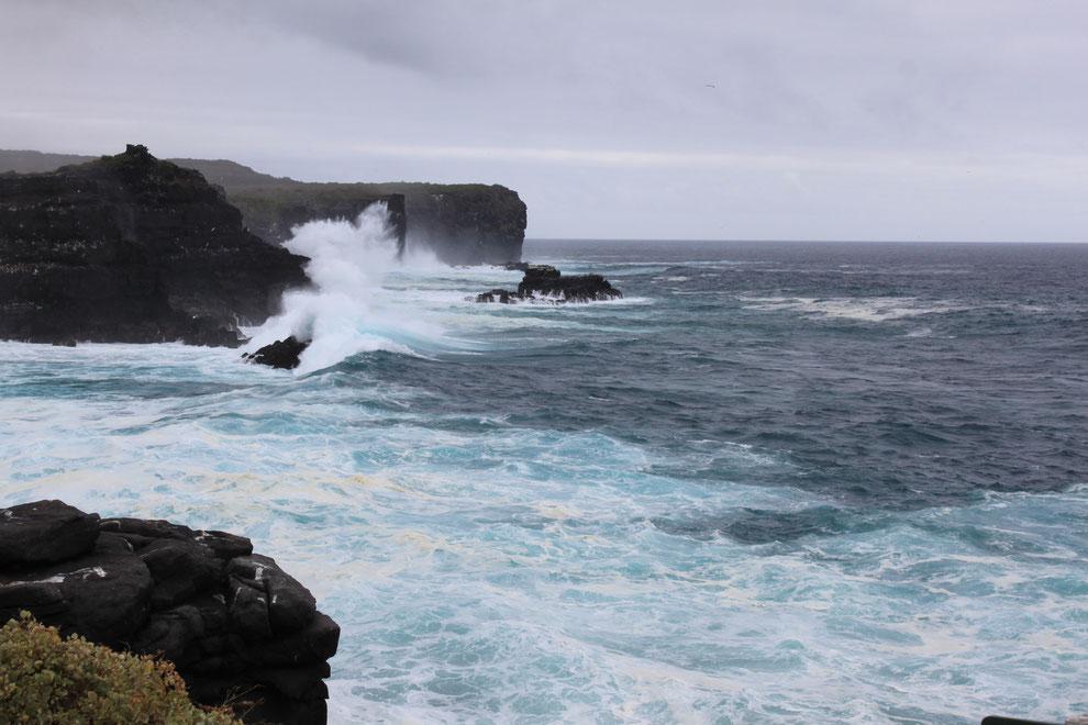Der Besuch von der Insel Española auf den Galápagos Inseln ist ein Höhepunkt einer Kreuzfahrt