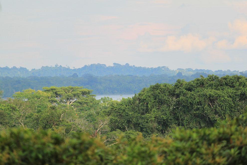 Ausflüge in das Amazonasgebiet in Ecuador mit ECUADORline