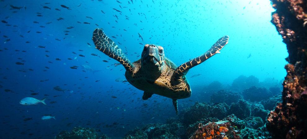 ECUADORLine organisiert Ihnen Ihre einmalige Tauchkreuzfahrt auf den Galápagos Inseln