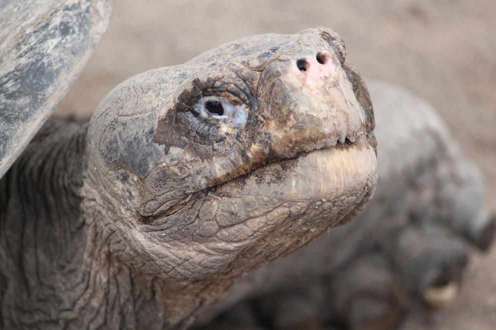 Eine Reise zum Nationalpark Galápagos bleibt ein unvergessliches Erlebnis