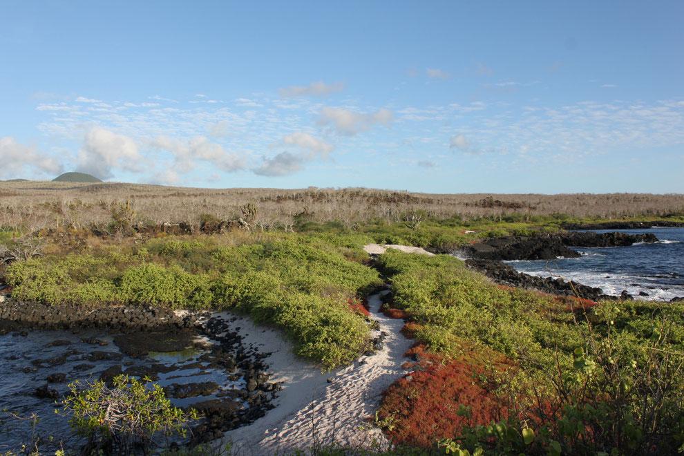 Island Hopping - Inselhüpfen - Insel Hopping auf den Galápagos Inseln ist eine gängige Alternative zur Kreuzfahrt geworden