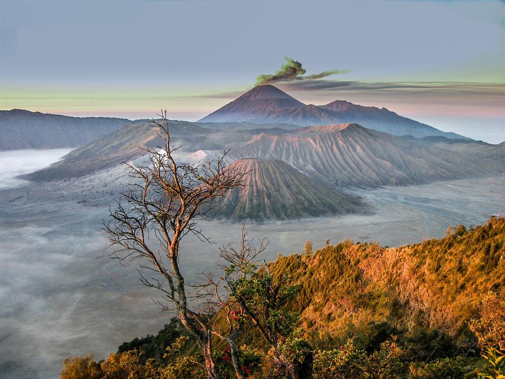 Indonésie - une zone volcanique époustouflante : le Bromo (cratère fumant derrière l'arbre), le Semeru (dernier plan) et le Batok (premier plan)