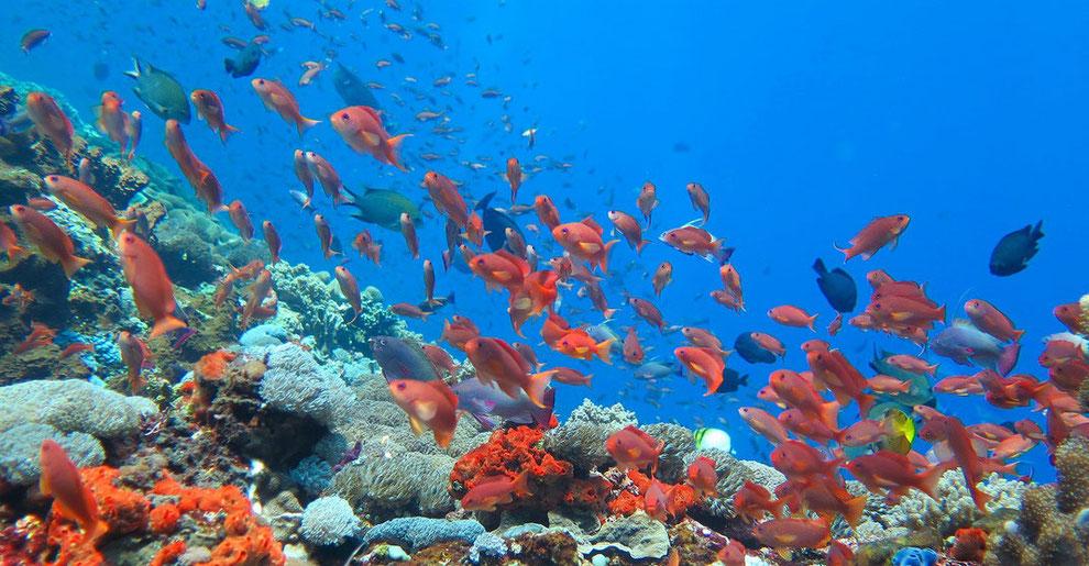 日本一のサンゴ礁「八重干潟」