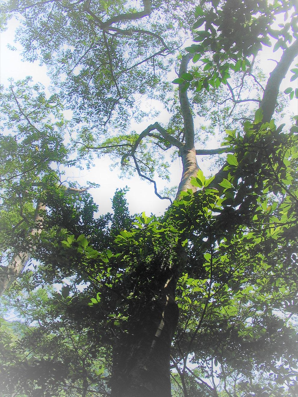 竪琴 ライアー てるる詩の木工房 てるる 41弦 39弦 leier lyre 沖縄の木 おきなわの木 竪琴販売 竪琴制作 ギター