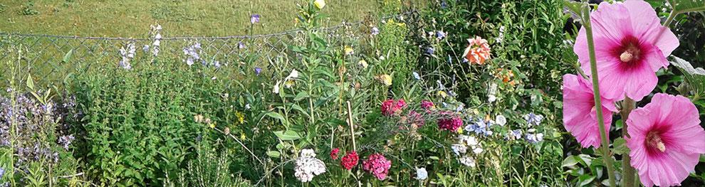 blumen im garten, stockrose, rose, glockenblume kathrin arnold