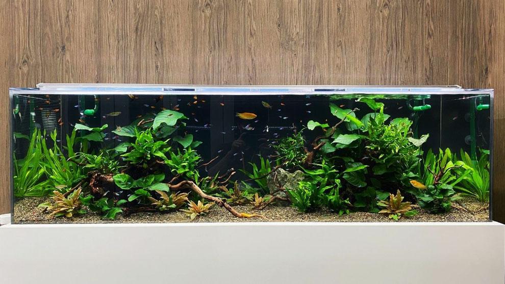 老人ホームや介護施設へアクアリウム水槽を設置する時のメリットを説明