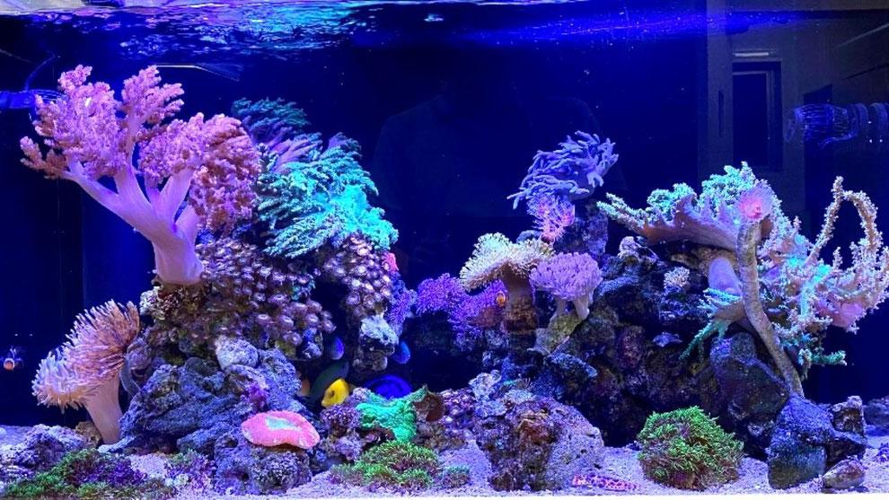海水魚用水槽照明選定方法の解説