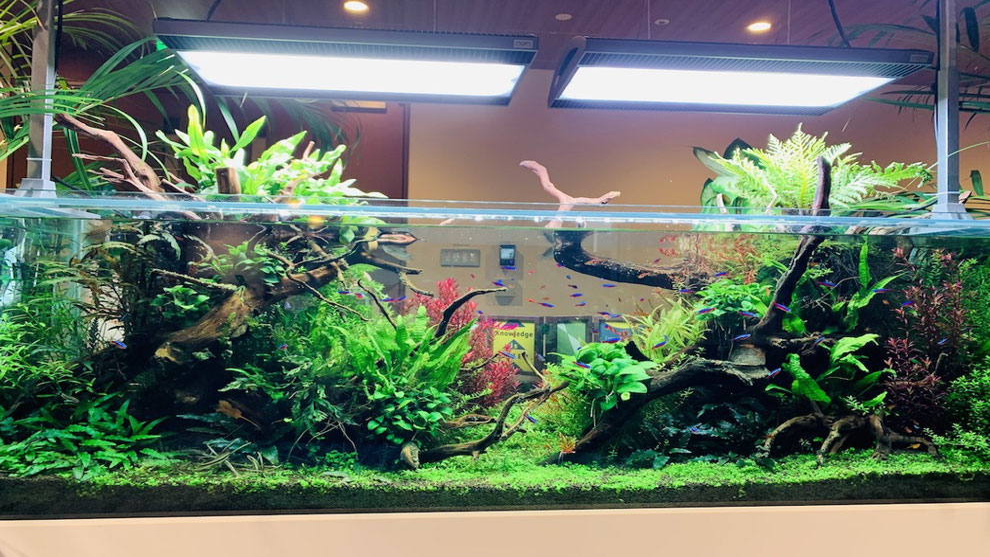 金魚飼育は熱帯魚水槽までの設備は不要の説明