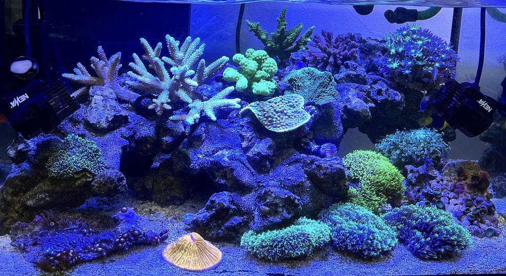 海水魚に使用する底砂
