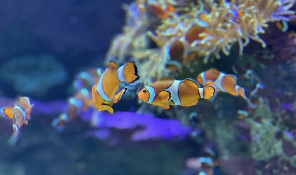 海水魚飼育のポイントである餌の与え方の説明